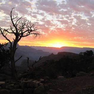 Dead Tree sunset crop