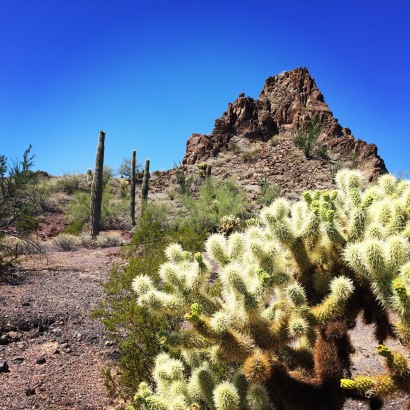 cactusmountain