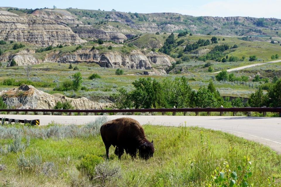 8 - Theodore Roosevelt buffalo